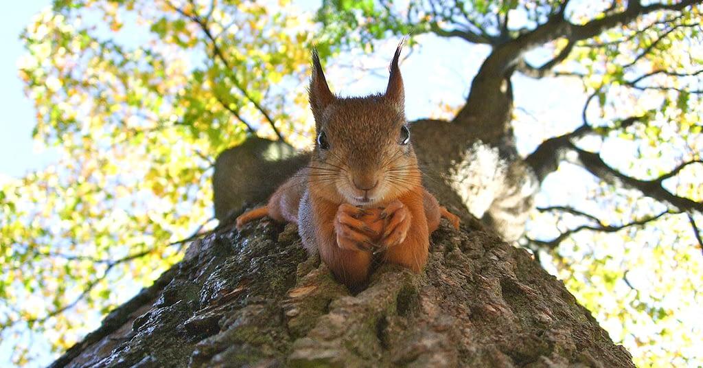 the cutest animal squirrel