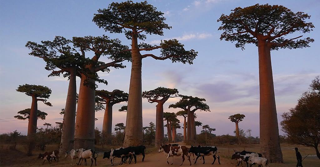 منطقة مينابي في مدغشقر- أجمل مدن العالم